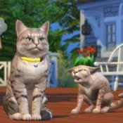 Игра Симс кошки и собаки